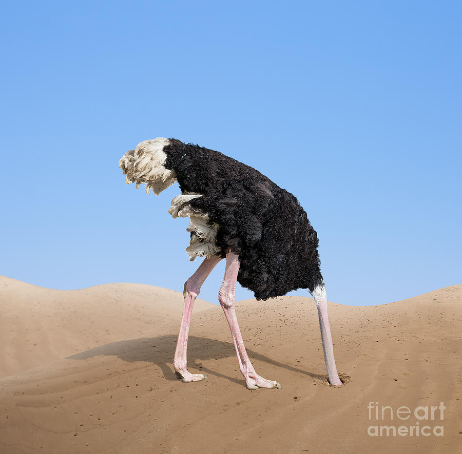 Denial Photograph - Scared Ostrich Burying Its Head In Sand by Andrey kuzmin