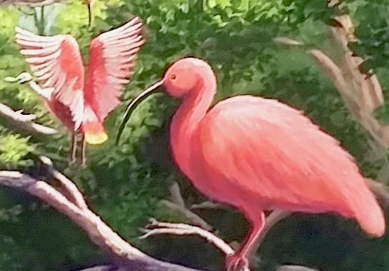 Pink Painting - Scarlet Ibis by Dara Dodson