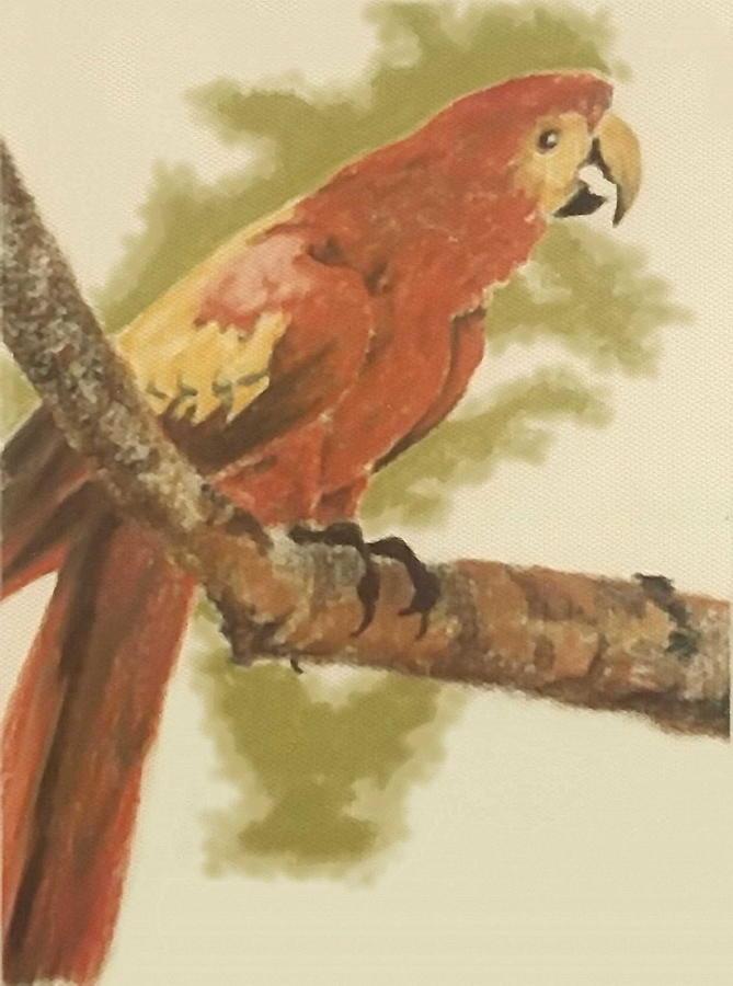 Scarlet Macaw by Barbara Keith