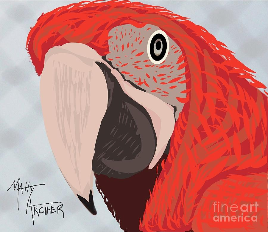 Scarlet Macaw by Matty Archer