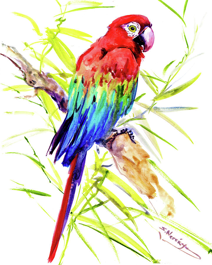 Scarlet Macaw Painting By Suren Nersisyan