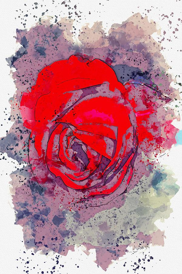 Flower Painting - scarlet rose watercolor by Ahmet Asar by Celestial Images