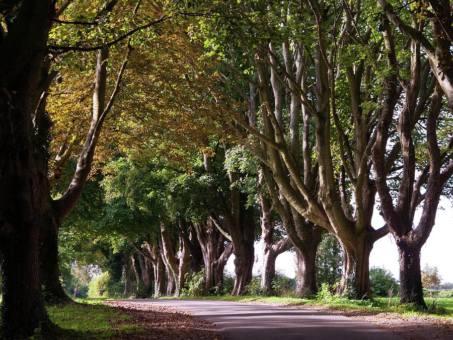 Scenic Cotswolds - Autumn Avenue Photograph