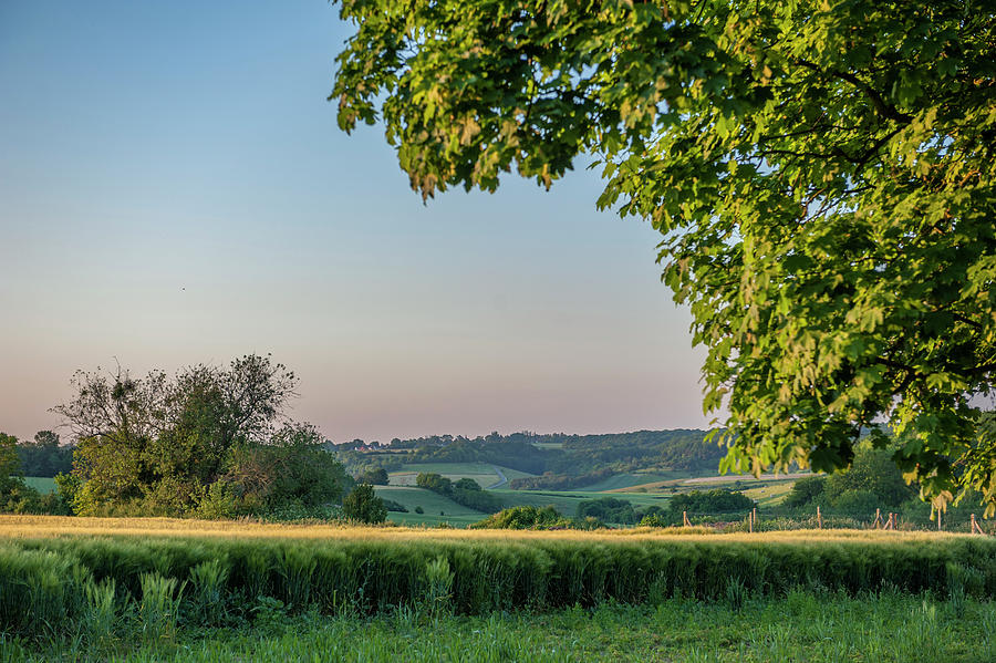 Afternoon Photograph - Scenic Crop Of Barley, Vexin Region by Lisa S. Engelbrecht