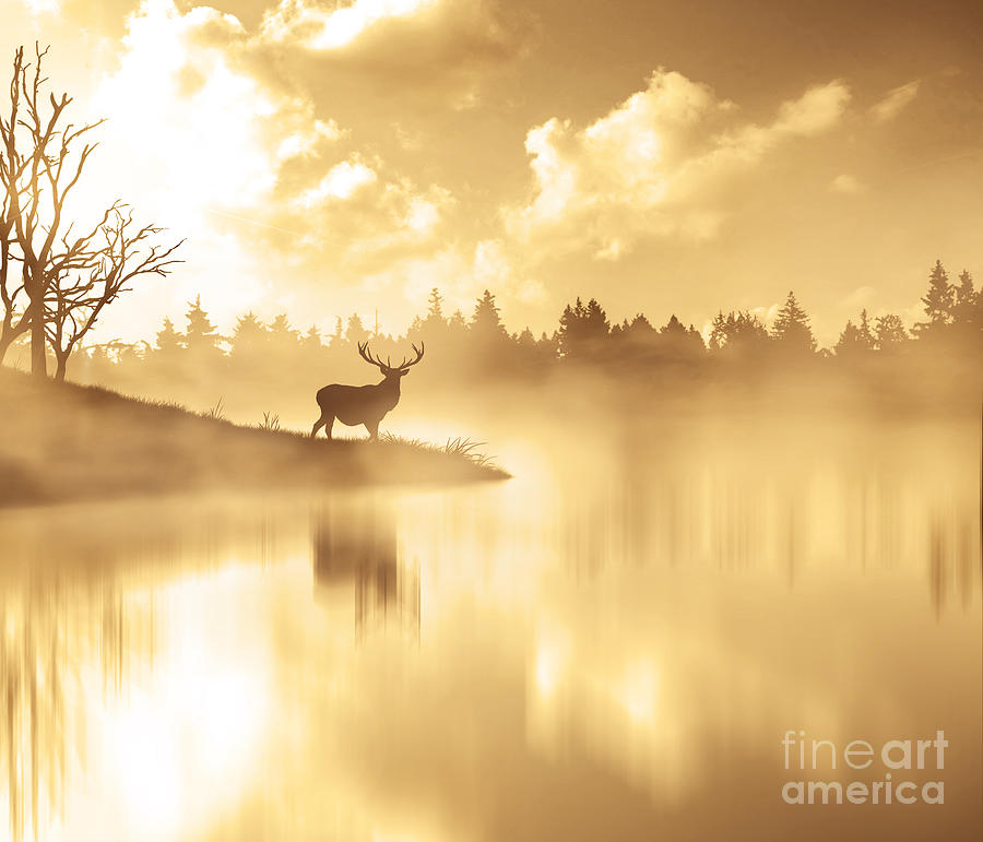 Scenic View Of Silhouette Deer By Lake Photograph by Stijn Dijkstra / Eyeem