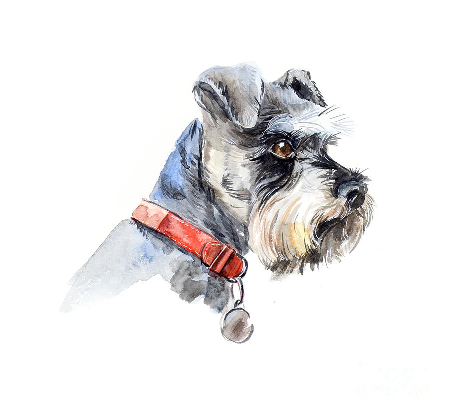 Pets Digital Art - Schnauzer. Portrait Of A Dog. Set With by Marya Kutuzova