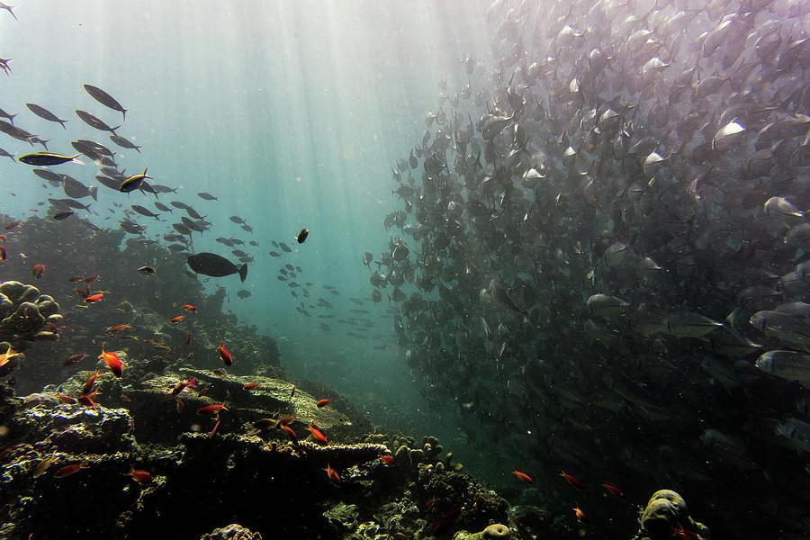 School of Fish by Carlene Smith