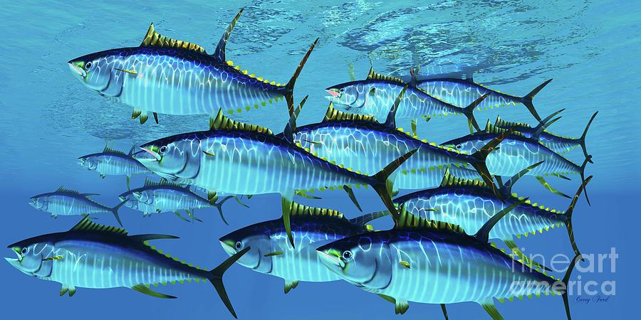 School of Yellowfin Tuna by Corey Ford