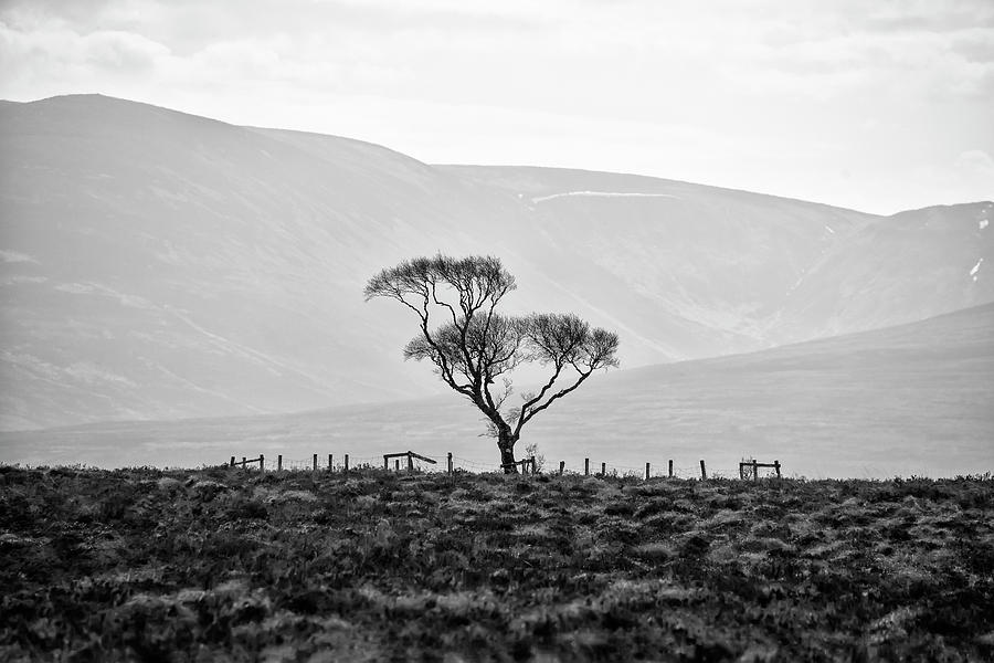 Scottish Photograph - Scottish Highland Tree In Black And White by Bill Cannon