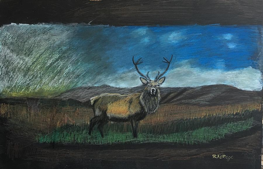 Scottish Stag by Richard Le Page