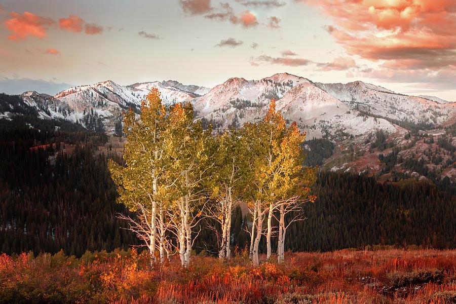 Utah Photograph - Scotts Peak Aspens by Johnny Adolphson