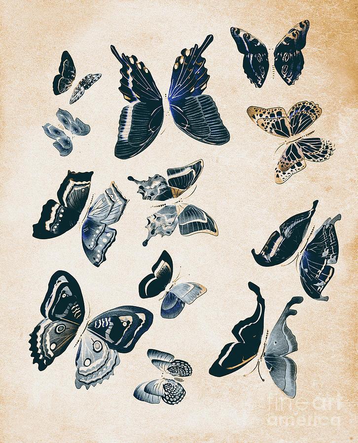 Antique Photograph - Scrapbook Butterflies by Jorgo Photography - Wall Art Gallery