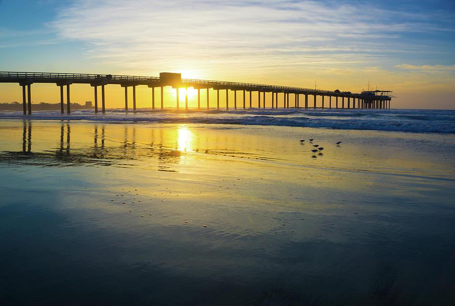 Surf Photograph - Scripps Pier Golden Sandpipers by Richard A Brown