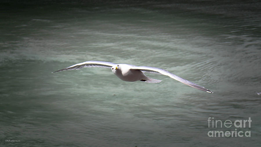 Seabird Over Alaska by Veronica Batterson