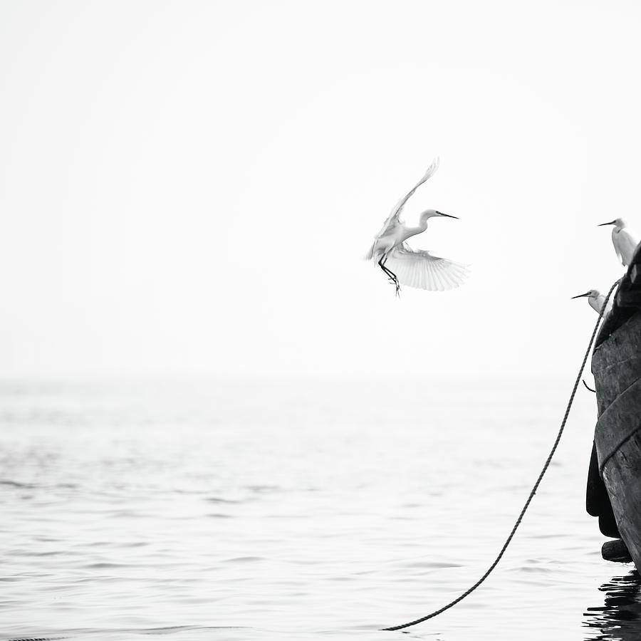 Sea Birds Of Shekou Shenzhen Photograph by Capturing A Second In Life, Copyright Leonardo Correa Luna