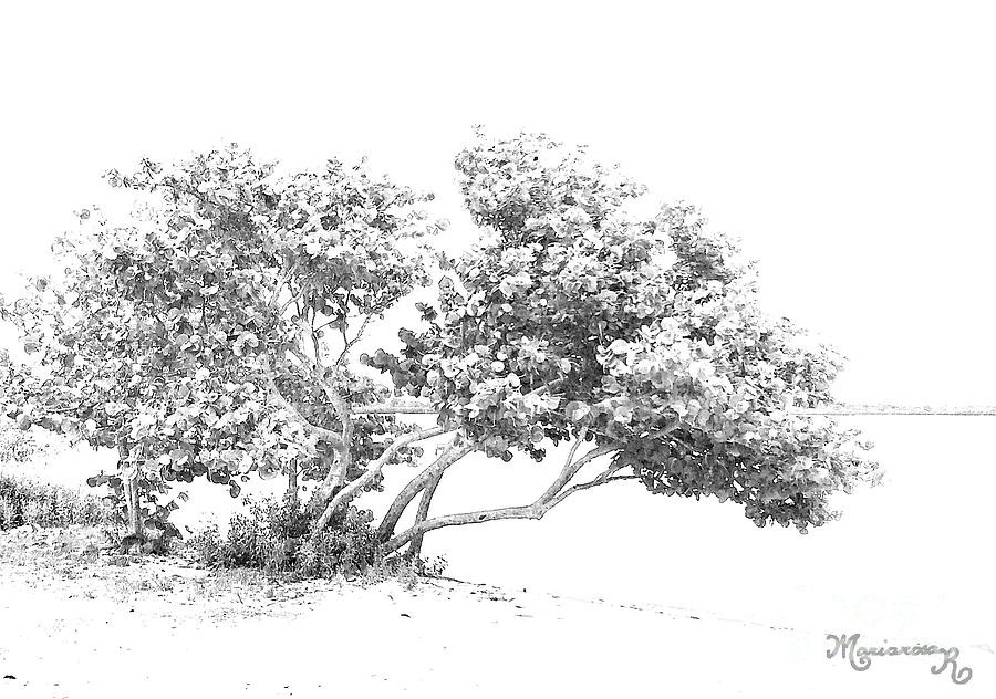 Sea Grape Tree by Mariarosa Rockefeller