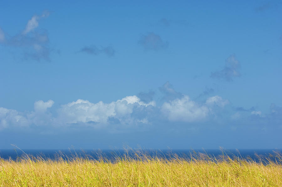 Sea Grass And Blue Sky Photograph by Driendl Group
