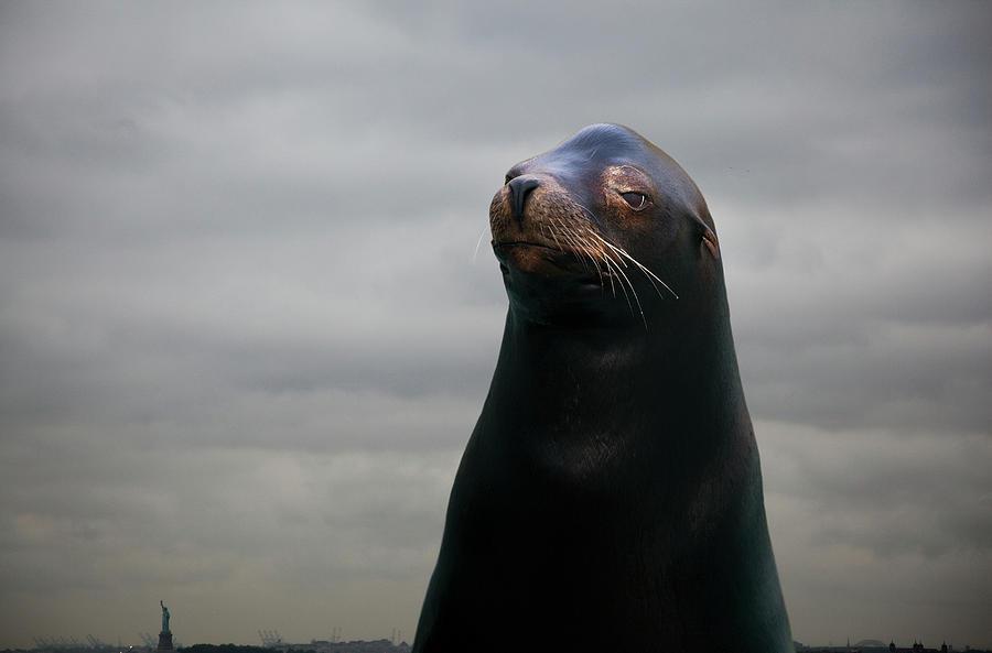 Sea Lion, Portrait Photograph by Thomas Jackson