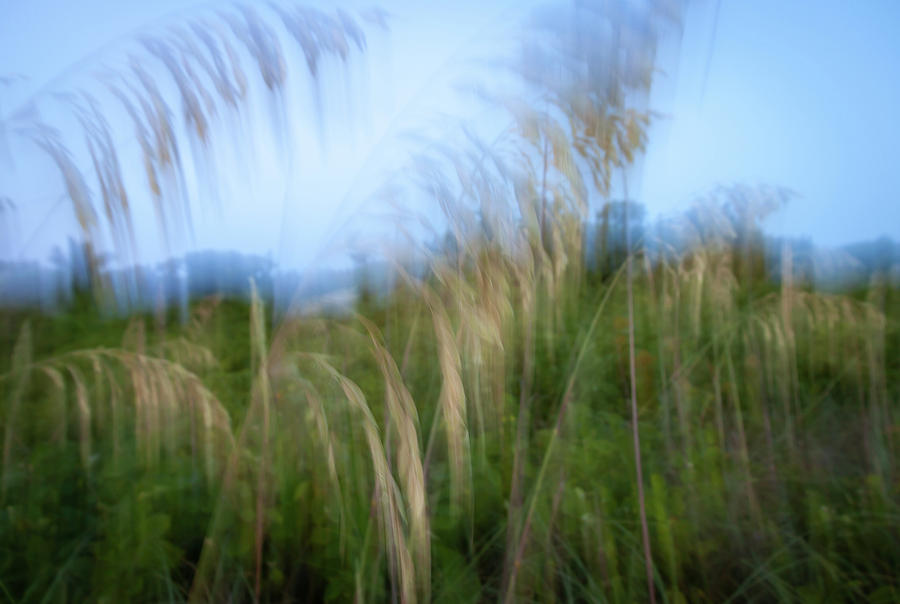 Sea Oats Abstract by R Scott Duncan