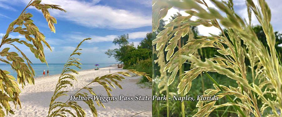 Sea Oats at Delnor-Wiggins Coffee Mug by Robb Stan