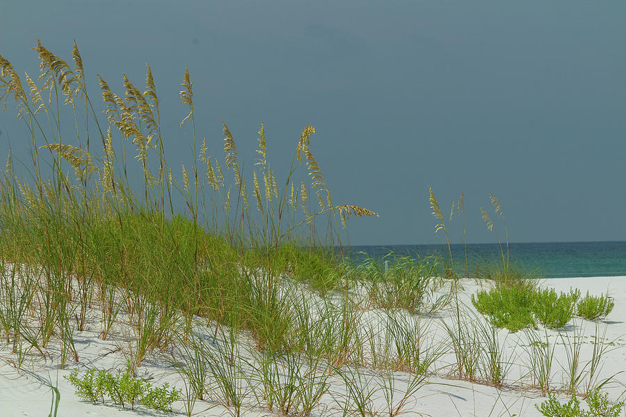 Sand Photograph - Sea Oats On White Sand by Tina Walsh