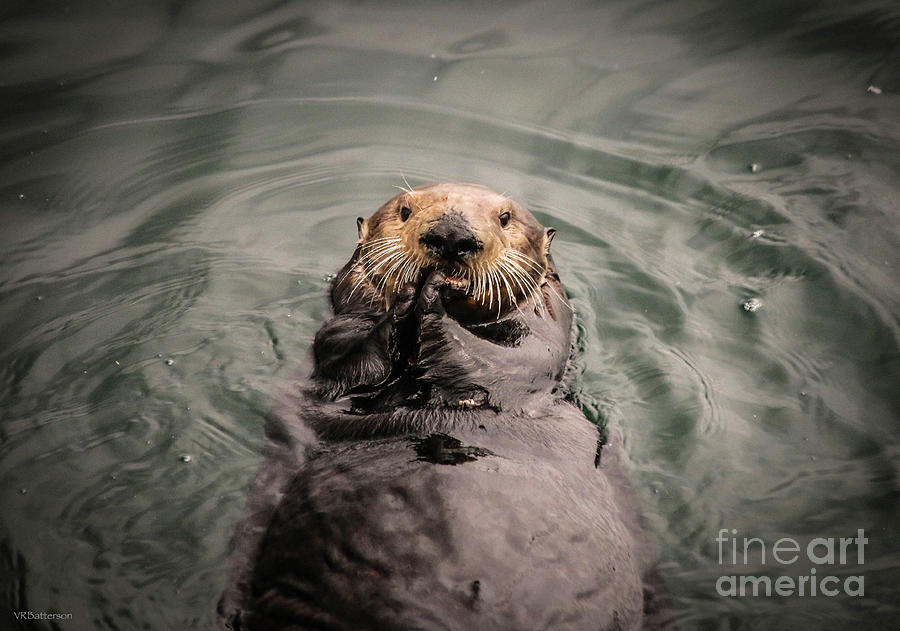 Sea Otter Monterey Bay II by Veronica Batterson