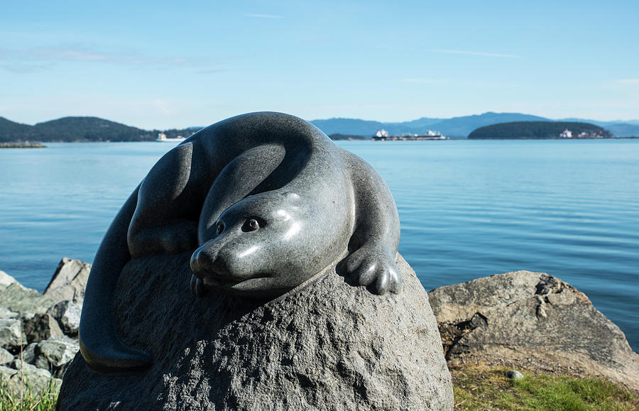Sea Otter by Tom Cochran