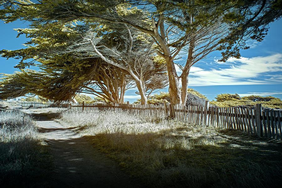 Sea Ranch Coastline by Jon Glaser
