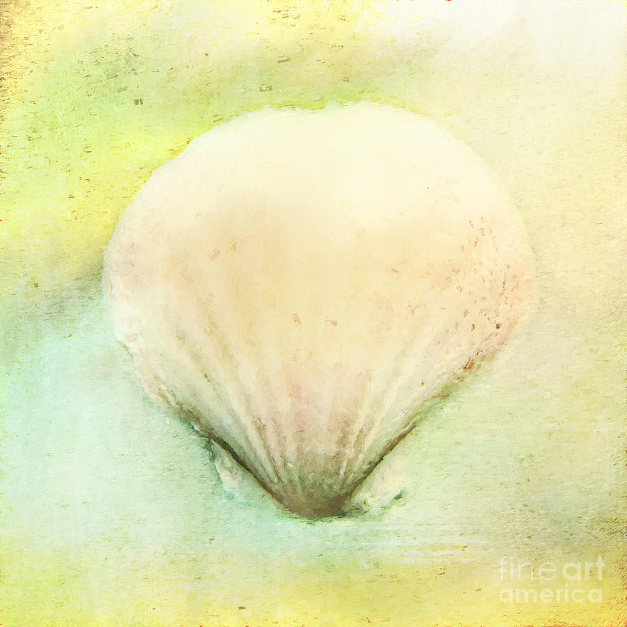 Sea Shell by Pam  Holdsworth