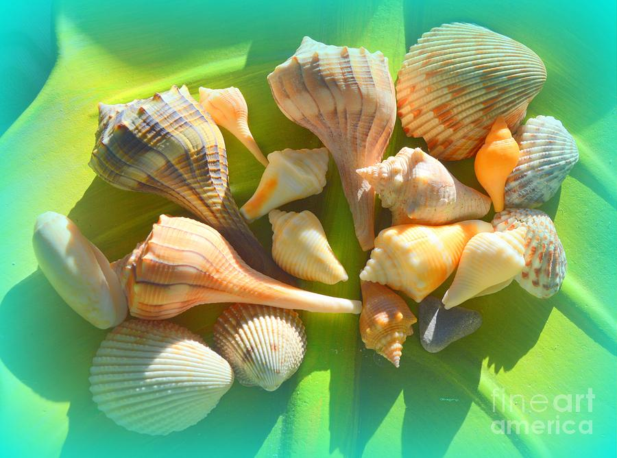 Sea Shells 1 by Greg Moores