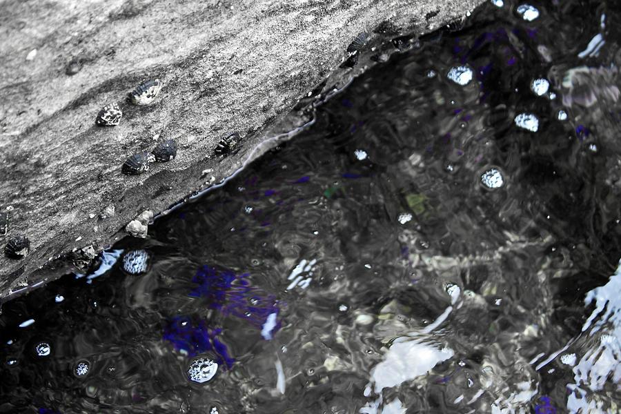 Sea Shells by the Seashore by Miroslava Jurcik