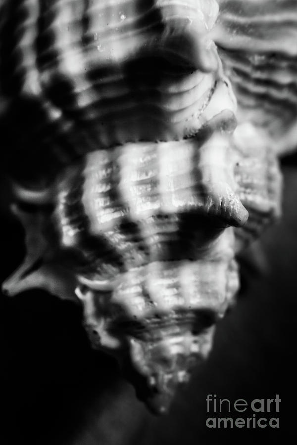 Shell Photograph - Sea Spiral  by Jorgo Photography - Wall Art Gallery