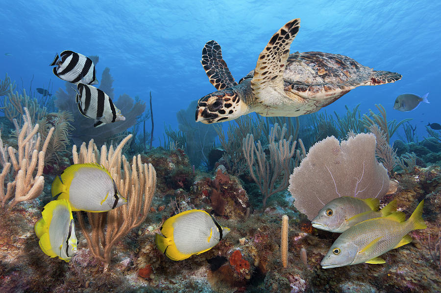 Sea Turtle, Fish, On Colorful Tropical Photograph by Jeff Hunter