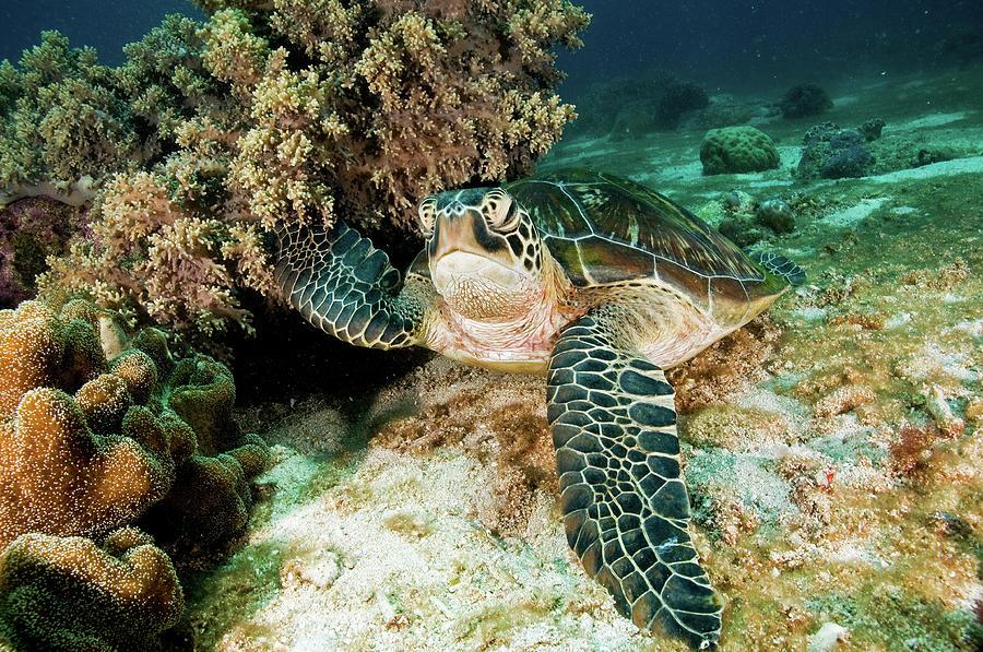 Sea Turtle Photograph by Ilan Ben Tov