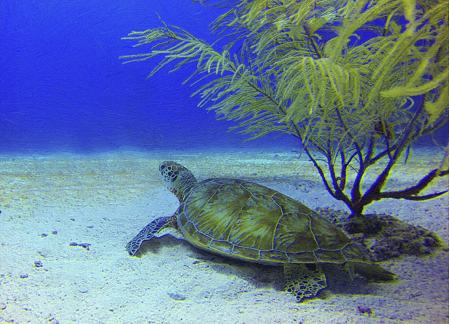 Sea Turtle off Mexican Coast - DWP549369 by Dean Wittle