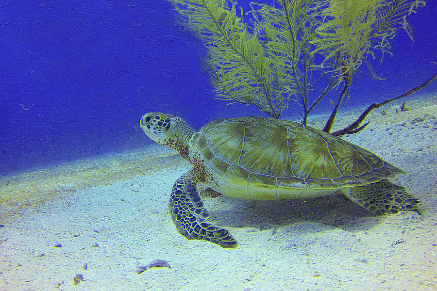 Sea Turtle off Mexican Coast - DWP588497 by Dean Wittle