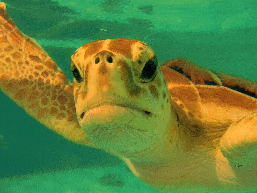 Sea Turtle off the Mexican Coast - DWP2086549 by Dean Wittle