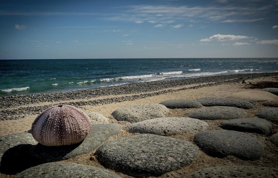 Sea Urchin View by Jean Noren