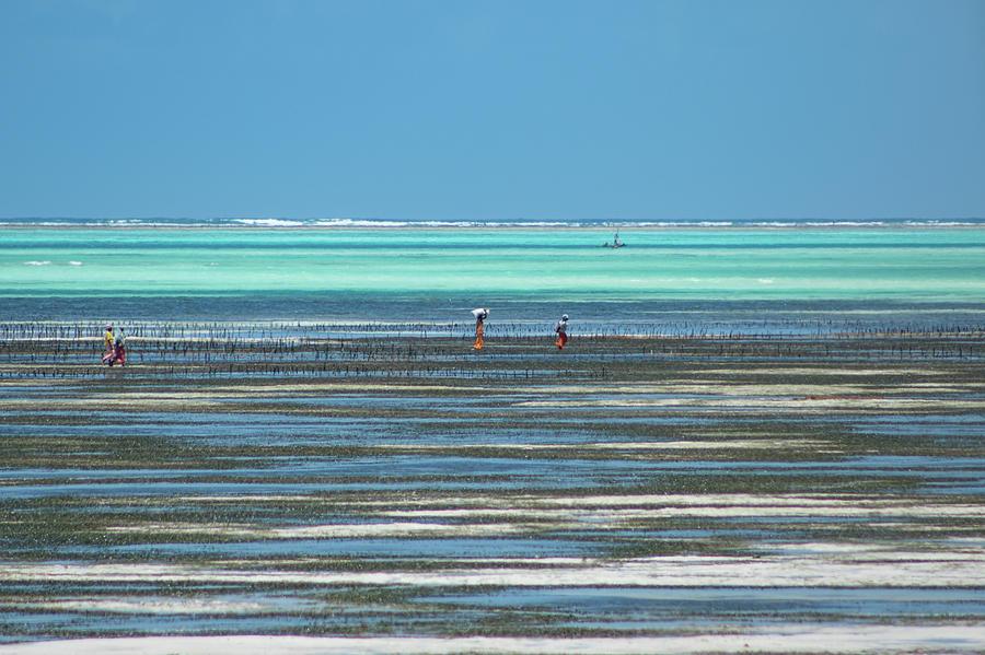 Sea weed collectors 1 by Mache Del Campo
