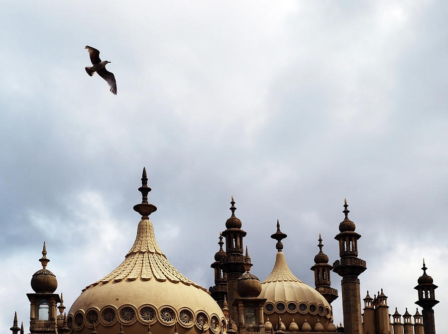 Royal Pavilion Photograph - Seagull And Brightonpavillion by Darren Lehane