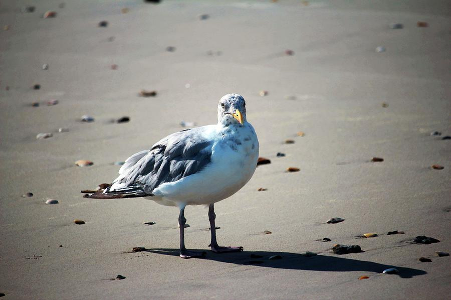 Seagull And Seashells by Cynthia Guinn