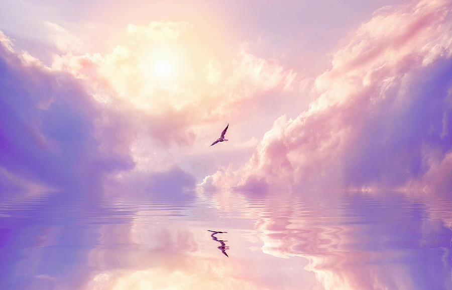 Seagull And Violet Clouds Photograph by Jane Khomi