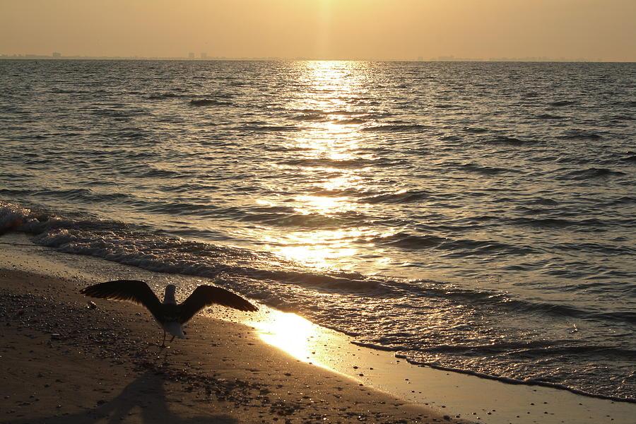 Seagull Beach Sunrise Photograph by Hiramtom