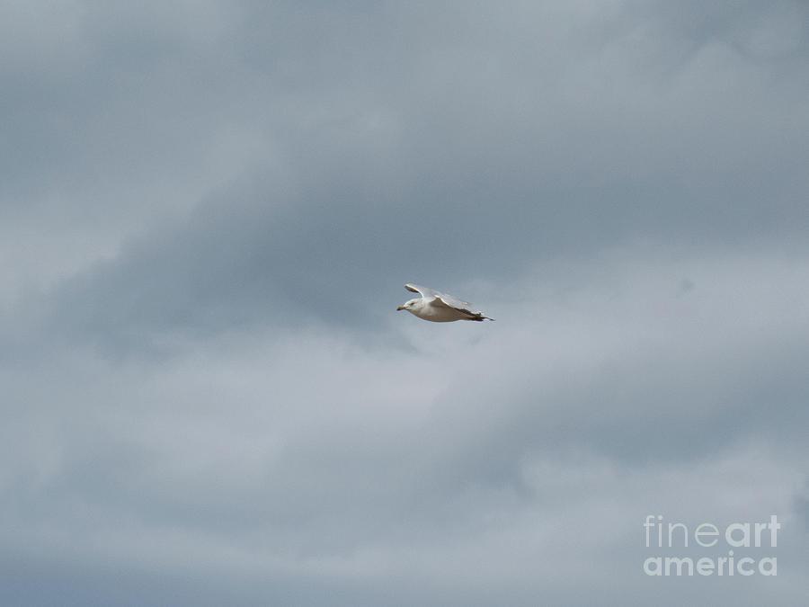 Seagull bird flying by Christy Garavetto