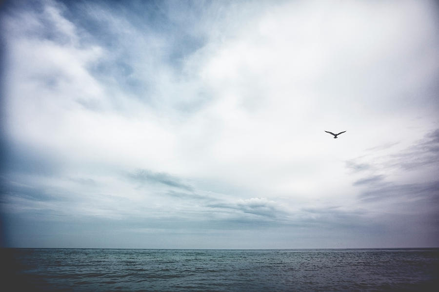 Seagull Flying Over Lake Michigan Photograph by Rebecca Nelson