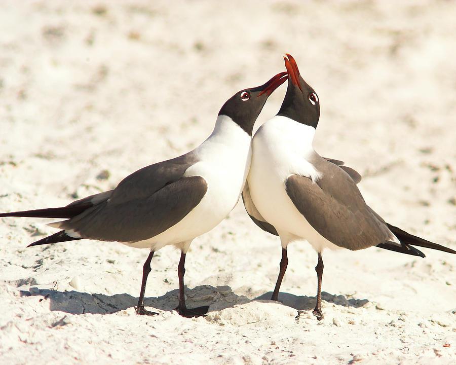 Seagull Love by Jane Axman