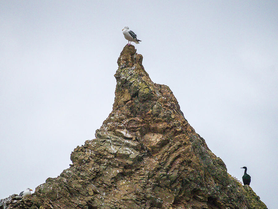 Seagull Pinnacle by Mark Mille