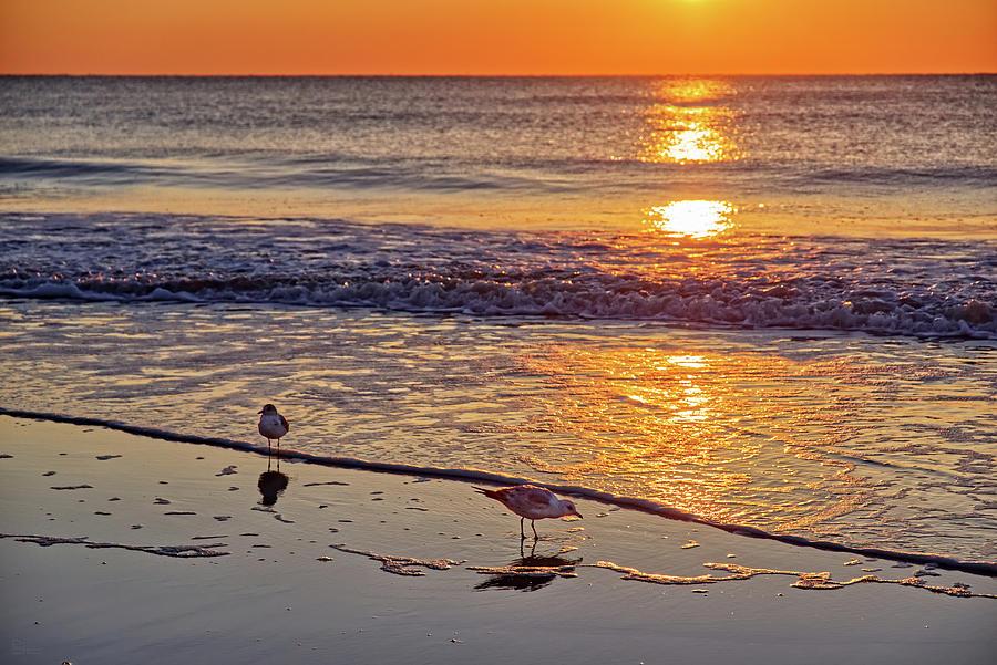 Seagull Sunrise - Tybee Island Beach sunrise by Peter Herman