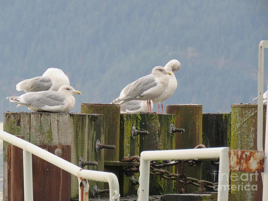 Seagulls Aloft by Mary Mikawoz
