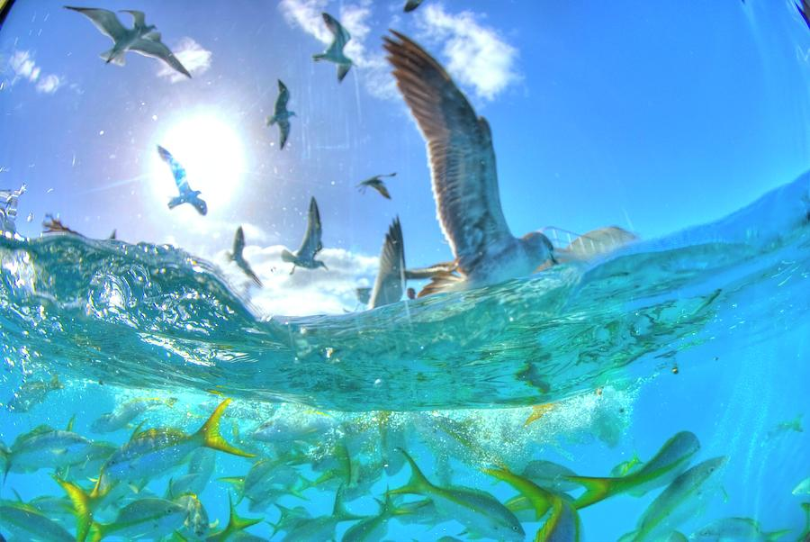 Seagulls And Reef Fish Photograph by M. Gungen Photography